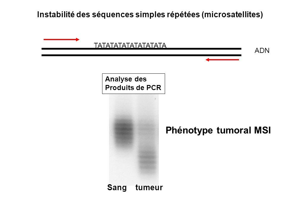 SYNDROME HNPCC (1) (cancer du colon héréditaire sans polypose) = Hereditary Non Polyposis Cancer - Suspicion dun caractère héréditaire depuis le début du siècle - Mais : Hétérogénéité génétique, pénétrance incomplète, phénocopies Difficulté de clonage des gènes Etapes du clonage: Liaison génétique: 2 loci 2p16 et 3p21 Instabilité microsatellite des tumeurs Clonage chez E Coli des gènes MutH, MutL, MutS Clonage chez lhomme des homologues (hMSH2, hMSH1) Confirmation de leur rôle dans lHNPCC: Mutation germinale Correction du phénotype mutateur des tumeurs hMLH1 -/- par surexpression hMLH1