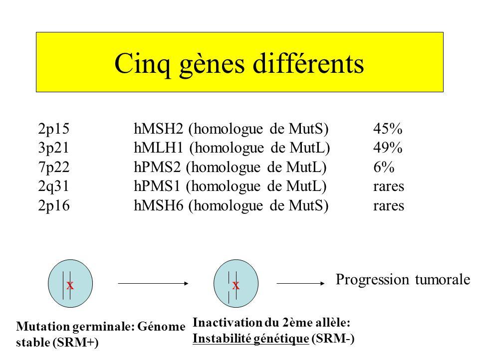 Cinq gènes différents 2p15hMSH2 (homologue de MutS)45% 3p21hMLH1 (homologue de MutL)49% 7p22hPMS2 (homologue de MutL)6% 2q31hPMS1 (homologue de MutL)r