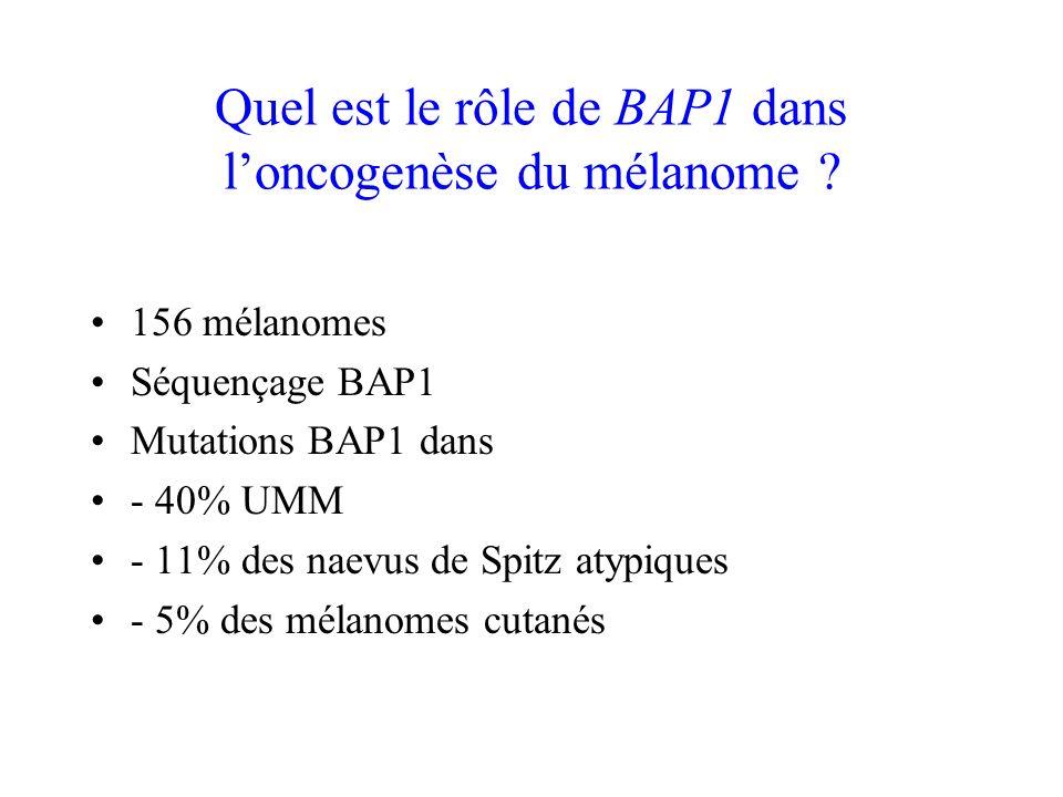La transformation du nevus en mélanome est associée à une perte de BAP1 80% des tumeurs mélanocytaires mutées BRAF Perte du 2ème allèle par délétion ou mutation ponctuelle