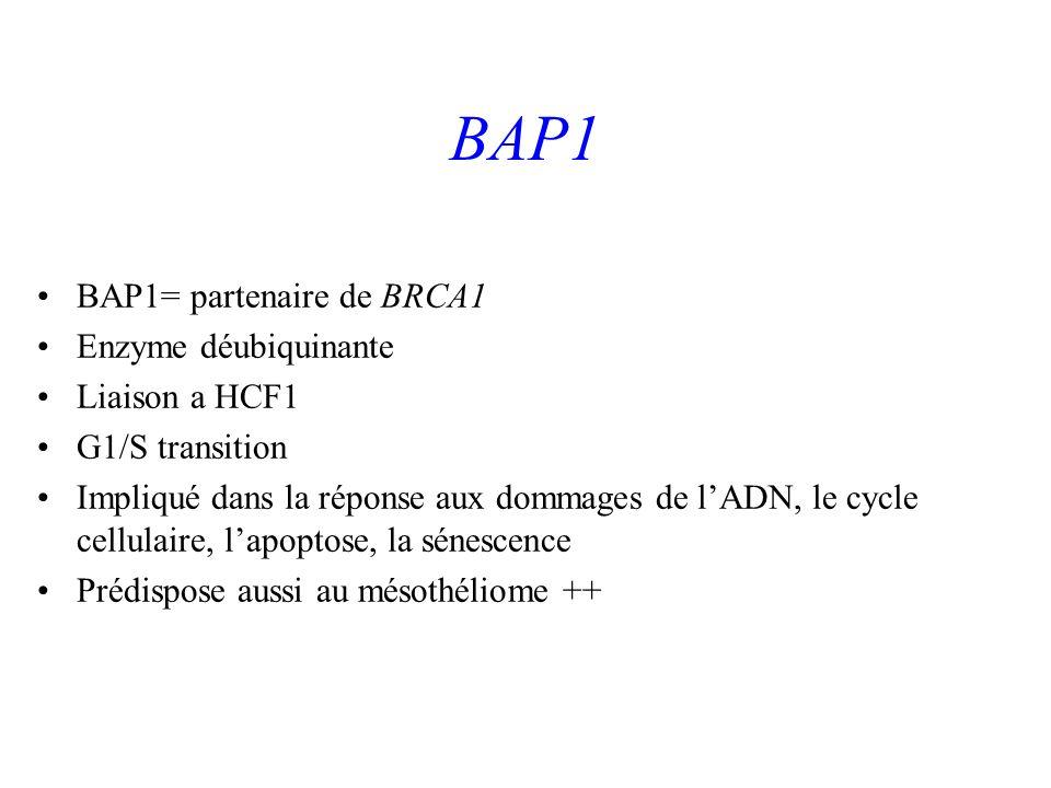 BAP1 BAP1= partenaire de BRCA1 Enzyme déubiquinante Liaison a HCF1 G1/S transition Impliqué dans la réponse aux dommages de lADN, le cycle cellulaire,