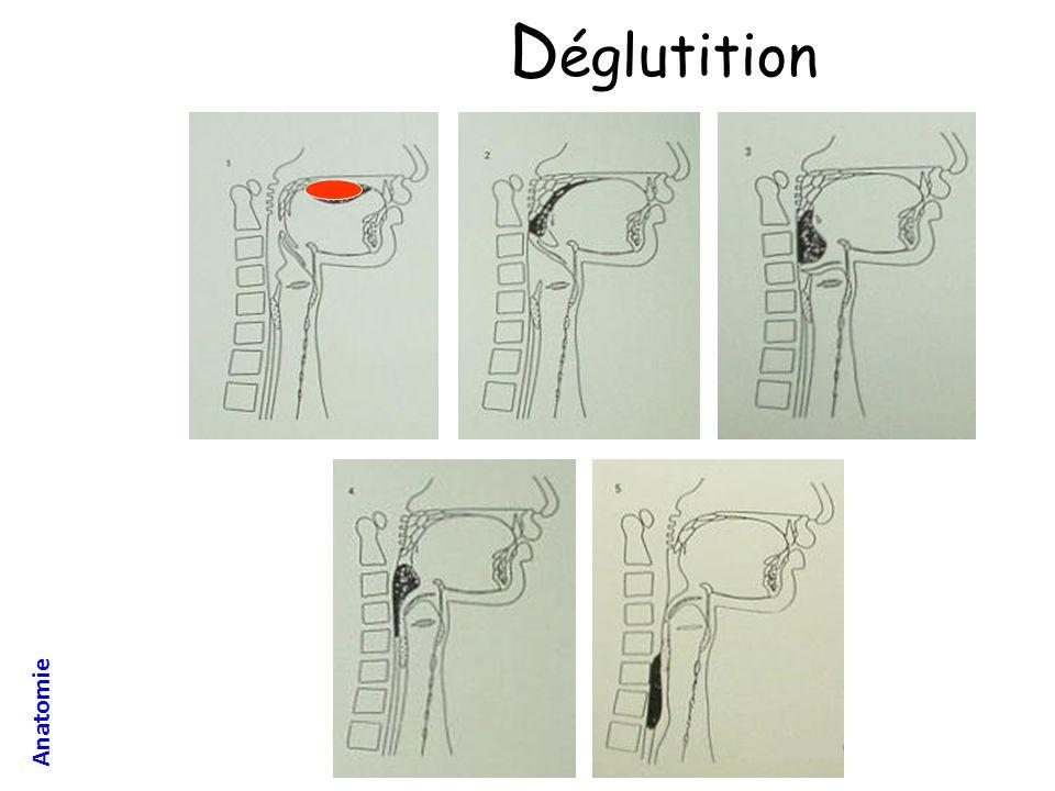 Toutes les techniques permettent la ventilation: – Intubation, trachéotomie, masque facial, VNI, masque laryngé…etc lintubation et la trachéotomie permettent de protéger les VAS – Les autres techniques sont contre indiquées en cas destomac plein (risque vomissement puis inhalation)