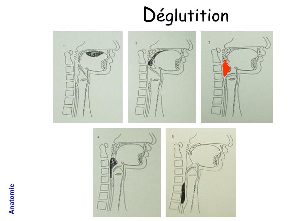 D églutition Anatomie