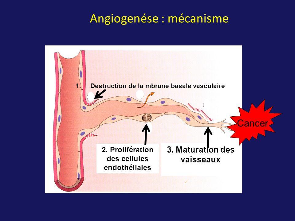 Angiogenése : mécanisme 1.Destruction de la mbrane basale vasculaire 2. Prolifération des cellules endothéliales 3. Maturation des vaisseaux Cancer