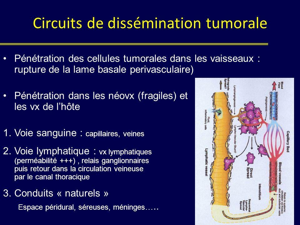 Circuits de dissémination tumorale Pénétration des cellules tumorales dans les vaisseaux : rupture de la lame basale perivasculaire) Pénétration dans