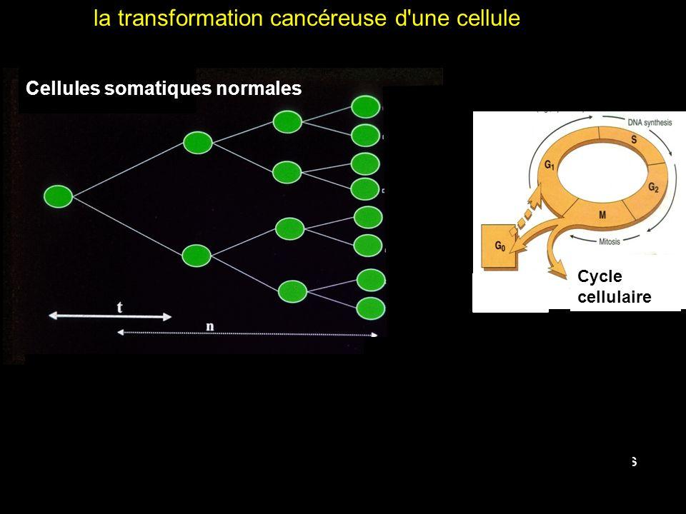 Clône Tumeur néoplasie Stimulus oncogénique : - Virus (HPV, HBV) - radiations ionisantes - environnement - Aflatoxine (mutation p 53) la transformation cancéreuse d une cellule