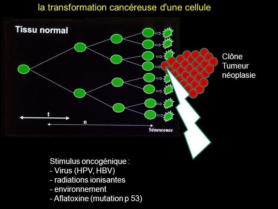Clône Tumeur néoplasie Stimulus oncogénique : - Virus (HPV, HBV) - radiations ionisantes - environnement - Aflatoxine (mutation p 53) la transformatio