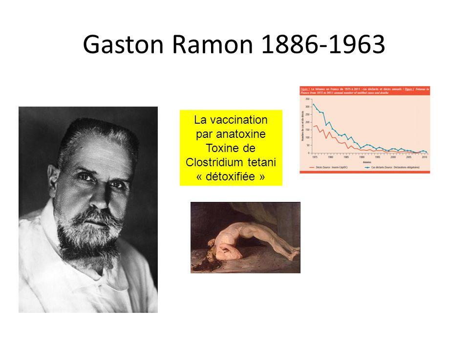 Gaston Ramon 1886-1963 La vaccination par anatoxine Toxine de Clostridium tetani « détoxifiée »