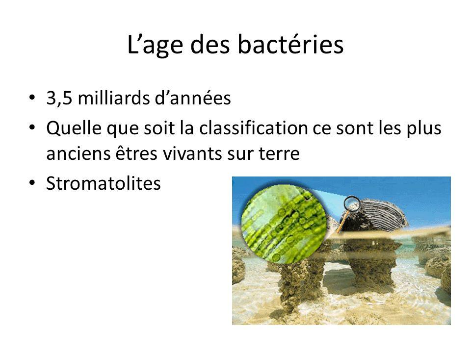 Lage des bactéries 3,5 milliards dannées Quelle que soit la classification ce sont les plus anciens êtres vivants sur terre Stromatolites