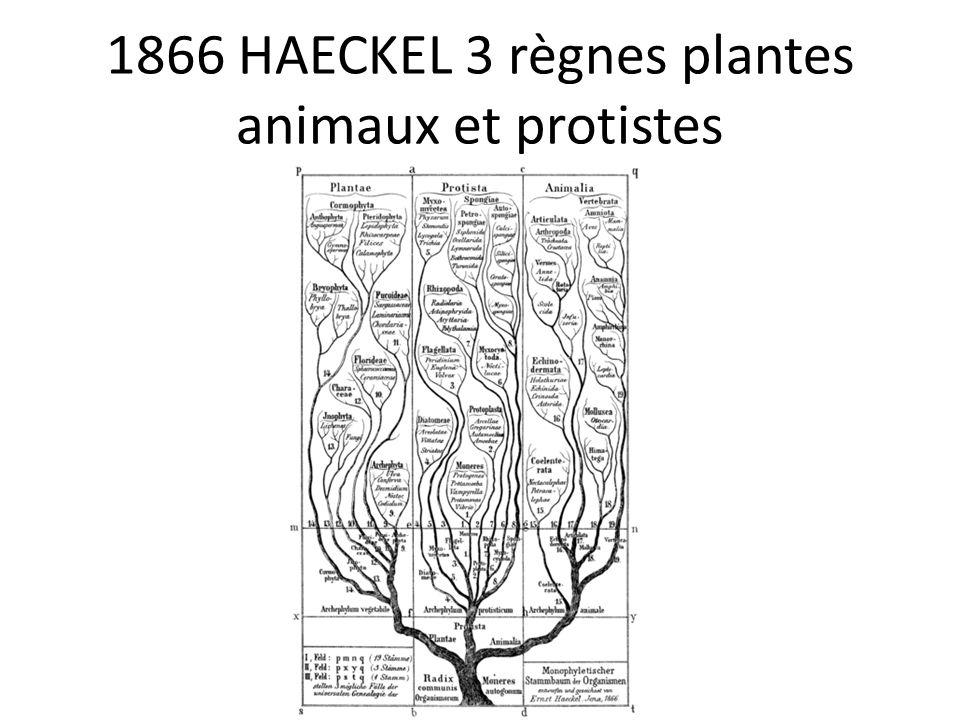 1866 HAECKEL 3 règnes plantes animaux et protistes