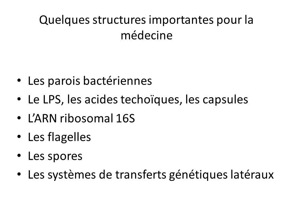 Quelques structures importantes pour la médecine Les parois bactériennes Le LPS, les acides techoïques, les capsules LARN ribosomal 16S Les flagelles