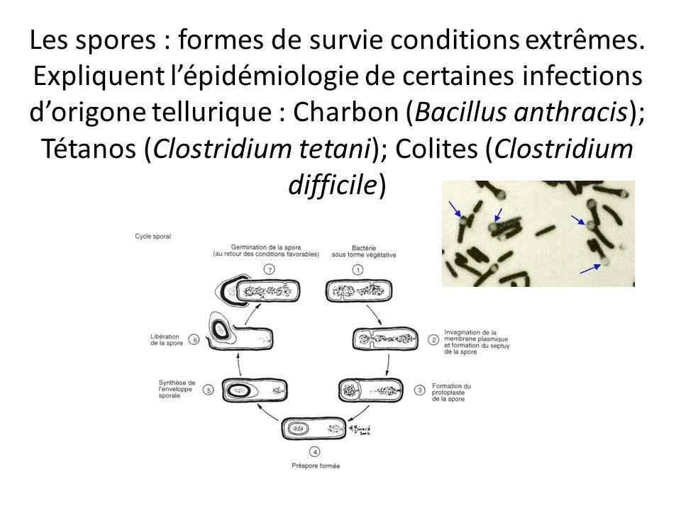 Les spores : formes de survie conditions extrêmes. Expliquent lépidémiologie de certaines infections dorigone tellurique : Charbon (Bacillus anthracis