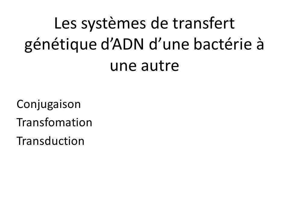 Les systèmes de transfert génétique dADN dune bactérie à une autre Conjugaison Transfomation Transduction