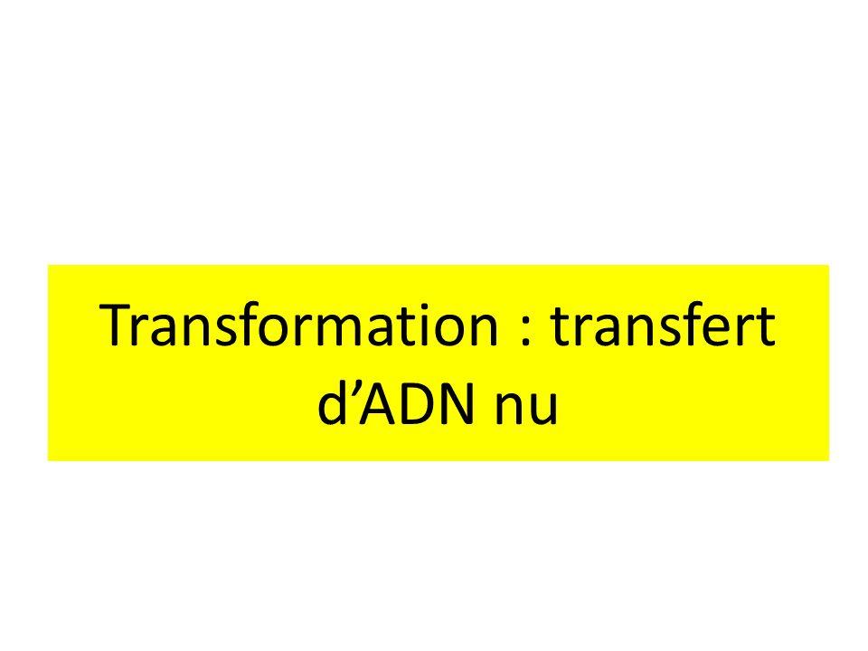 Transformation : transfert dADN nu