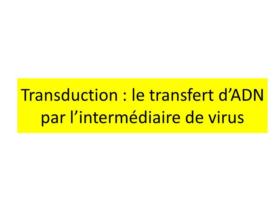 Transduction : le transfert dADN par lintermédiaire de virus