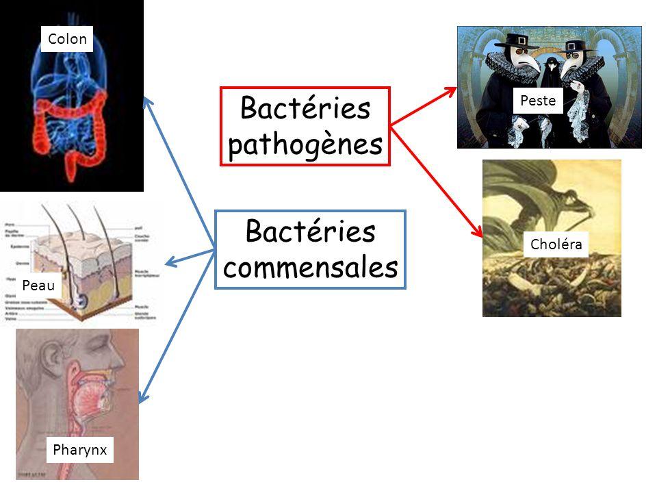Bactéries commensales Bactéries pathogènes Colon Peau Pharynx Peste Choléra