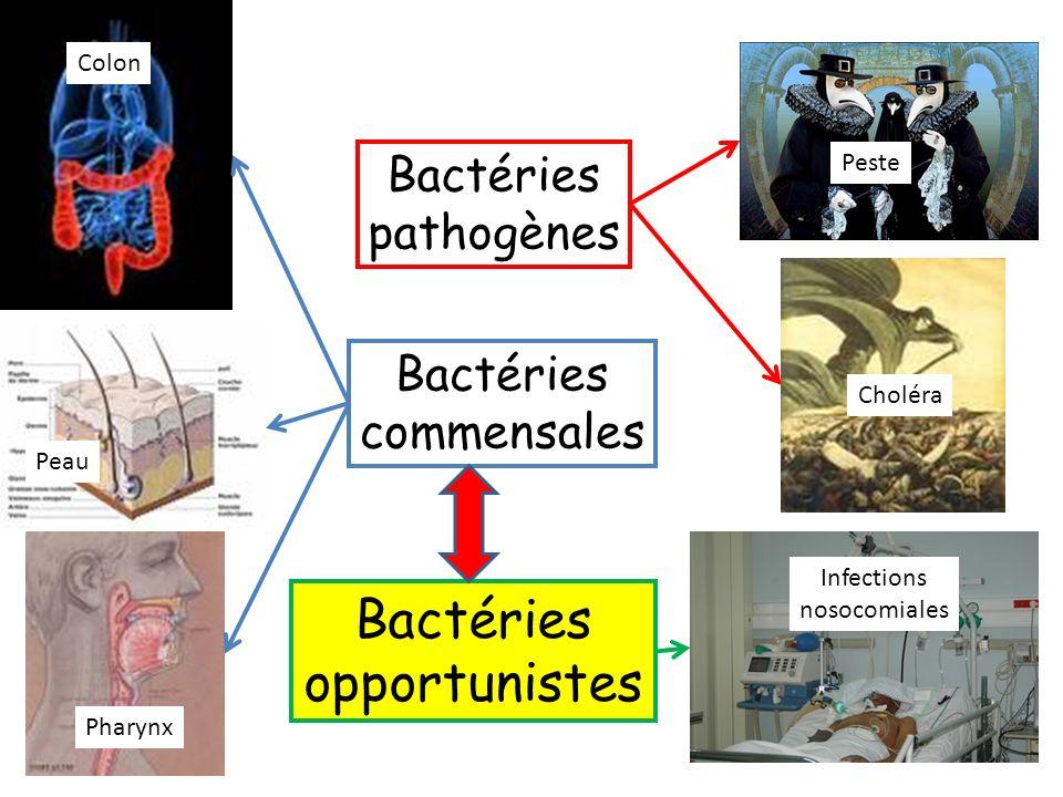 Bactéries commensales Bactéries pathogènes Colon Peau Pharynx Peste Choléra Bactéries opportunistes Infections nosocomiales