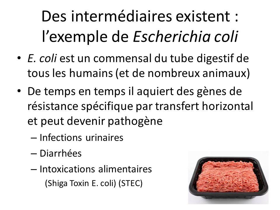 Des intermédiaires existent : lexemple de Escherichia coli E. coli est un commensal du tube digestif de tous les humains (et de nombreux animaux) De t