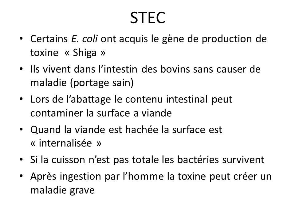 STEC Certains E. coli ont acquis le gène de production de toxine « Shiga » Ils vivent dans lintestin des bovins sans causer de maladie (portage sain)