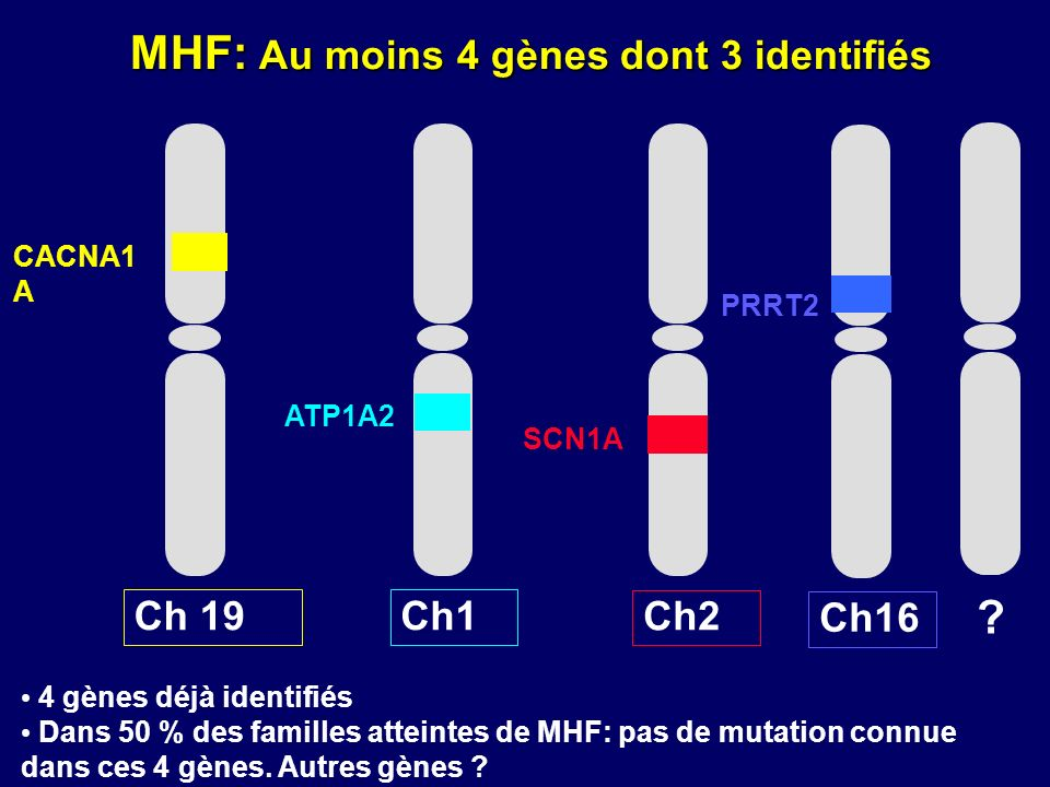 MHF: Au moins 4 gènes dont 3 identifiés Ch 19Ch1 CACNA1 A Ch2 SCN1A ? Ch16 PRRT2 ATP1A2 4 gènes déjà identifiés Dans 50 % des familles atteintes de MH