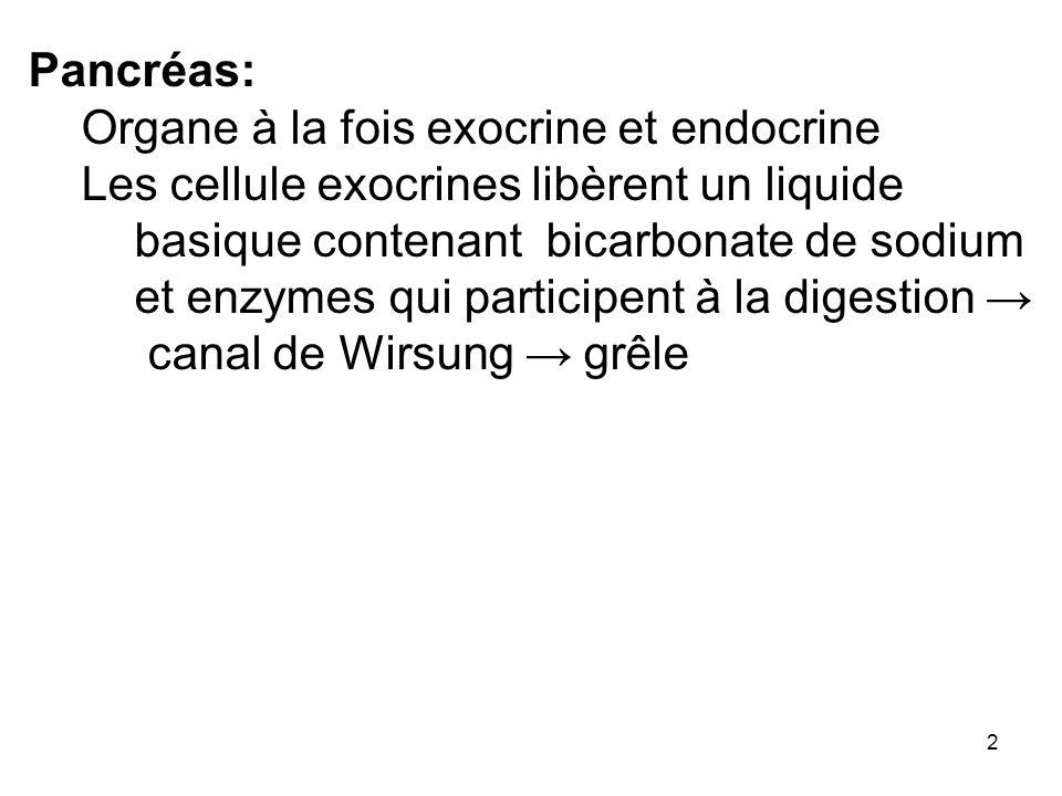 2 Pancréas: Organe à la fois exocrine et endocrine Les cellule exocrines libèrent un liquide basique contenant bicarbonate de sodium et enzymes qui pa