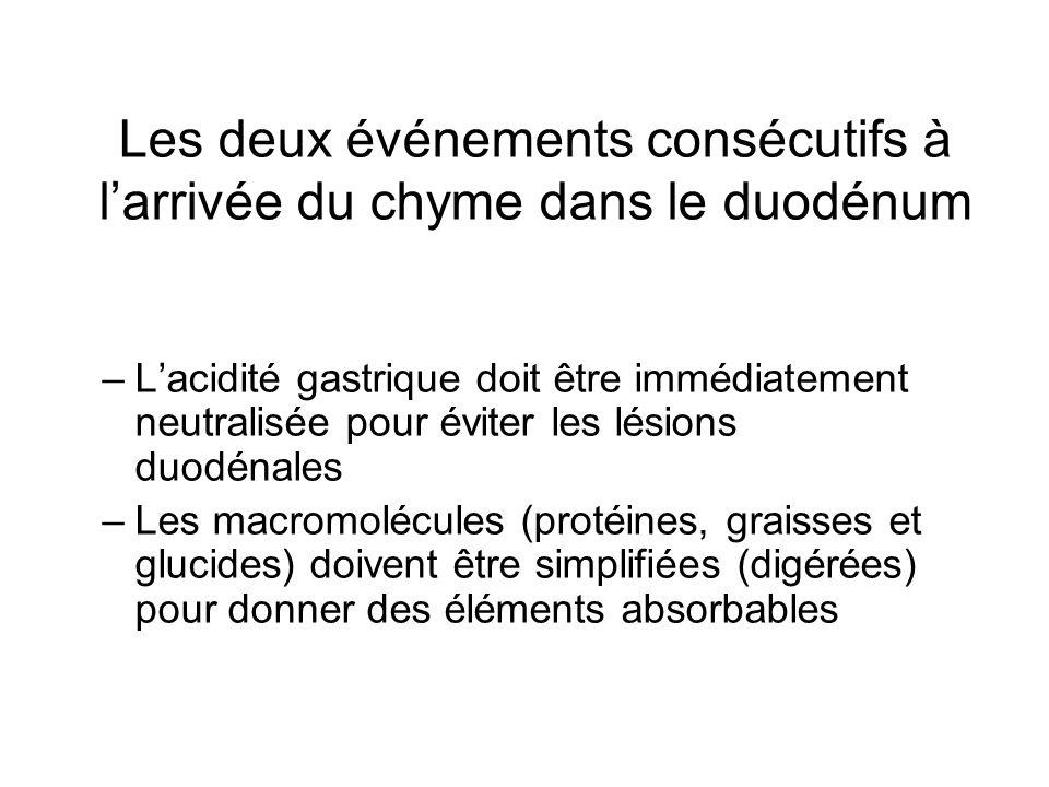 Les deux événements consécutifs à larrivée du chyme dans le duodénum –Lacidité gastrique doit être immédiatement neutralisée pour éviter les lésions d