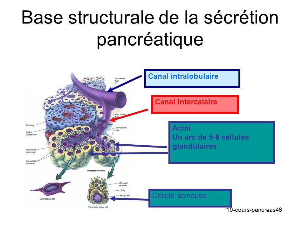 10-cours-pancreas46 Base structurale de la sécrétion pancréatique Acini Un arc de 5-8 cellules glandulaires Canal intercalaire Canal intralobulaire Ce