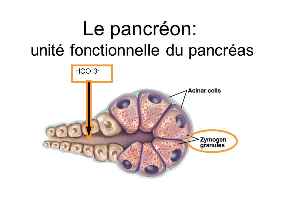 Le pancréon: unité fonctionnelle du pancréas HCO 3 -