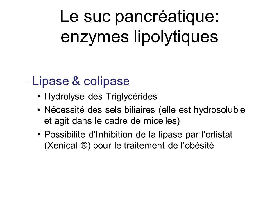 Le suc pancréatique: enzymes lipolytiques –Lipase & colipase Hydrolyse des Triglycérides Nécessité des sels biliaires (elle est hydrosoluble et agit d