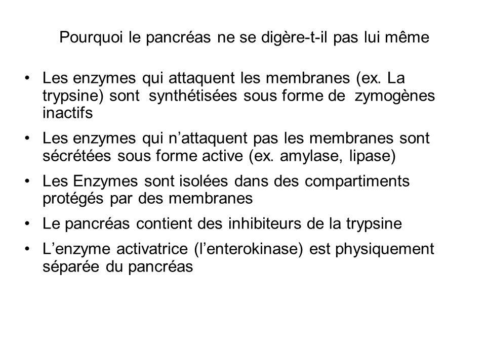 Pourquoi le pancréas ne se digère-t-il pas lui même Les enzymes qui attaquent les membranes (ex. La trypsine) sont synthétisées sous forme de zymogène