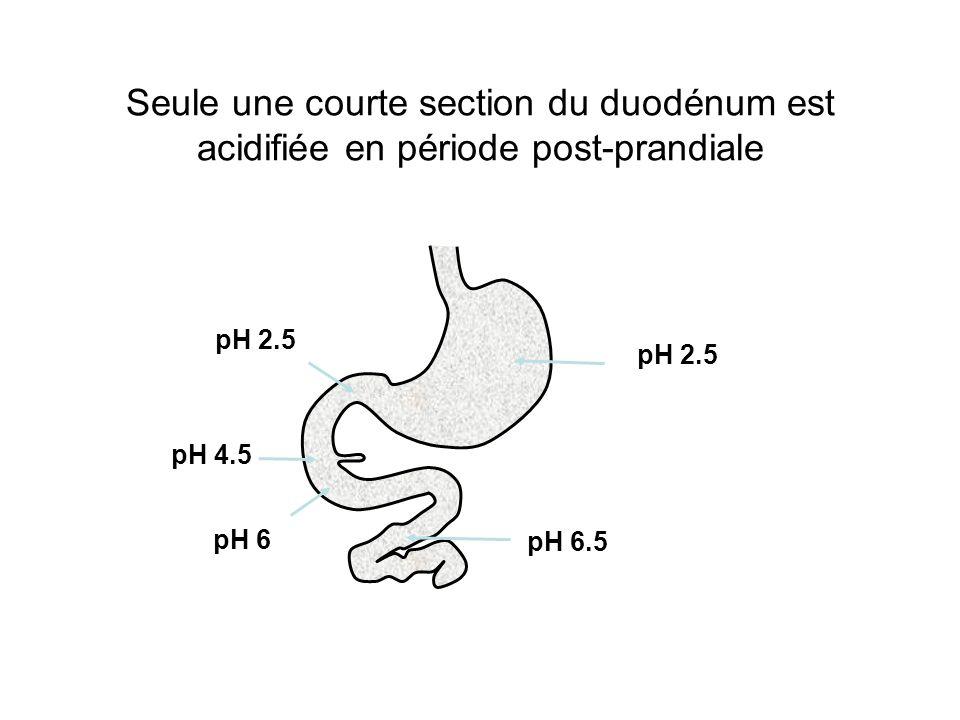Seule une courte section du duodénum est acidifiée en période post-prandiale pH 2.5 pH 4.5 pH 6 pH 6.5