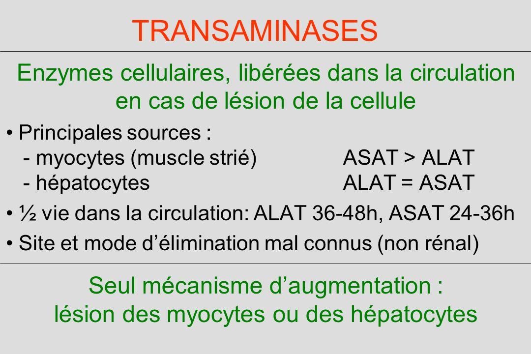 TRANSAMINASES Enzymes cellulaires, libérées dans la circulation en cas de lésion de la cellule Principales sources : - myocytes (muscle strié) ASAT > ALAT - hépatocytes ALAT = ASAT ½ vie dans la circulation: ALAT 36-48h, ASAT 24-36h Site et mode délimination mal connus (non rénal) Seul mécanisme daugmentation : lésion des myocytes ou des hépatocytes