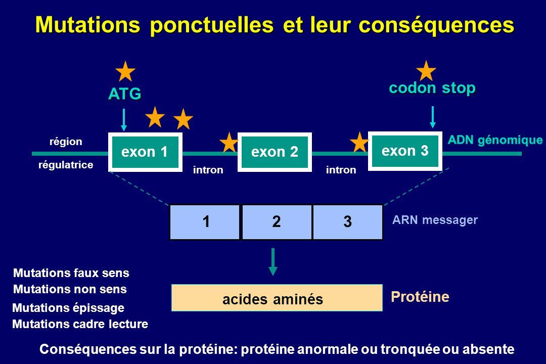 exon 1exon 2 exon 3 Mutations ponctuelles et leur conséquences intron région régulatrice ATG 123 codon stop ARN messager acides aminés Protéine Mutations faux sens Mutations non sens Mutations épissage Mutations cadre lecture Conséquences sur la protéine: protéine anormale ou tronquée ou absente