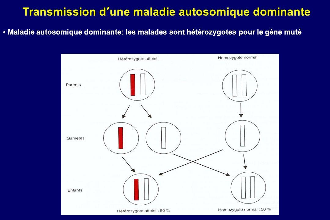 Transmission dune maladie autosomique dominante Maladie autosomique dominante: les malades sont hétérozygotes pour le gène muté