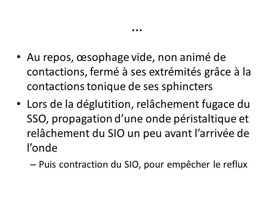 … Au repos, œsophage vide, non animé de contactions, fermé à ses extrémités grâce à la contactions tonique de ses sphincters Lors de la déglutition, r