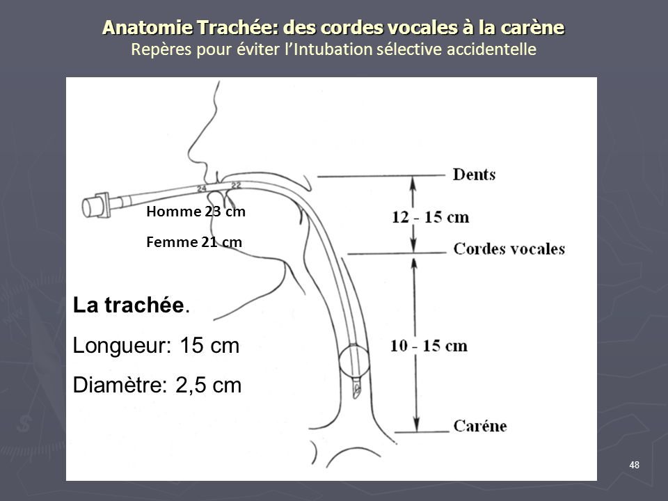 48 Anatomie Trachée: des cordes vocales à la carène Anatomie Trachée: des cordes vocales à la carène Repères pour éviter lIntubation sélective accidentelle La trachée.