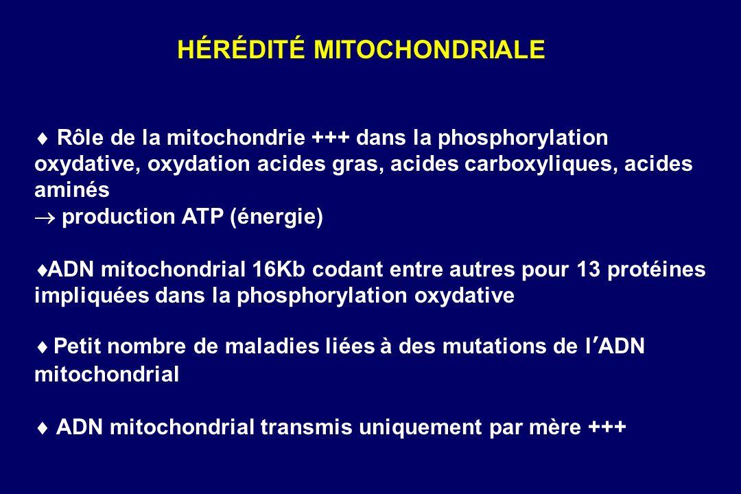 Rôle de la mitochondrie +++ dans la phosphorylation oxydative, oxydation acides gras, acides carboxyliques, acides aminés production ATP (énergie) ADN