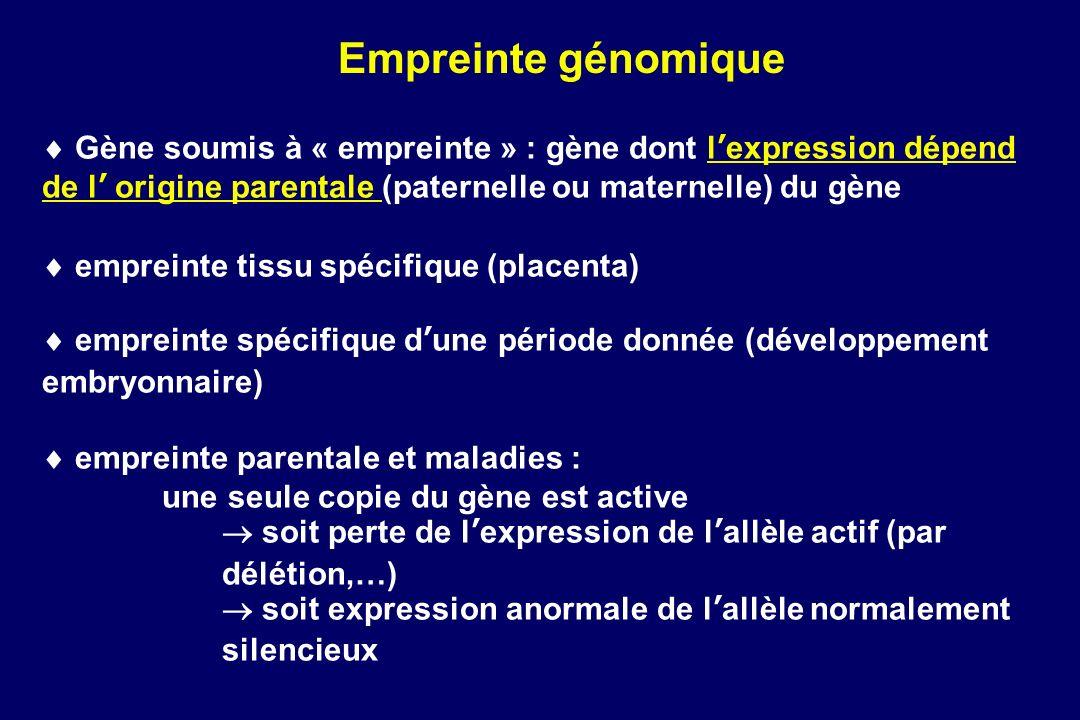Gène soumis à « empreinte » : gène dont lexpression dépend de l origine parentale (paternelle ou maternelle) du gène empreinte tissu spécifique (place