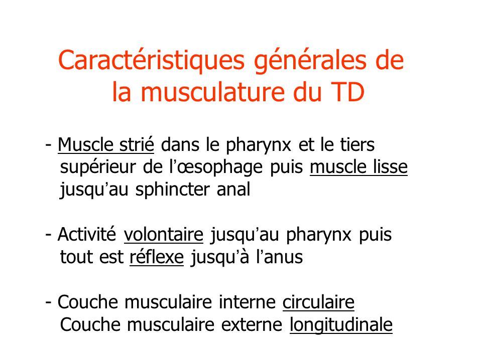 Caractéristiques générales de la musculature du TD - Muscle strié dans le pharynx et le tiers supérieur de lœsophage puis muscle lisse jusquau sphinct