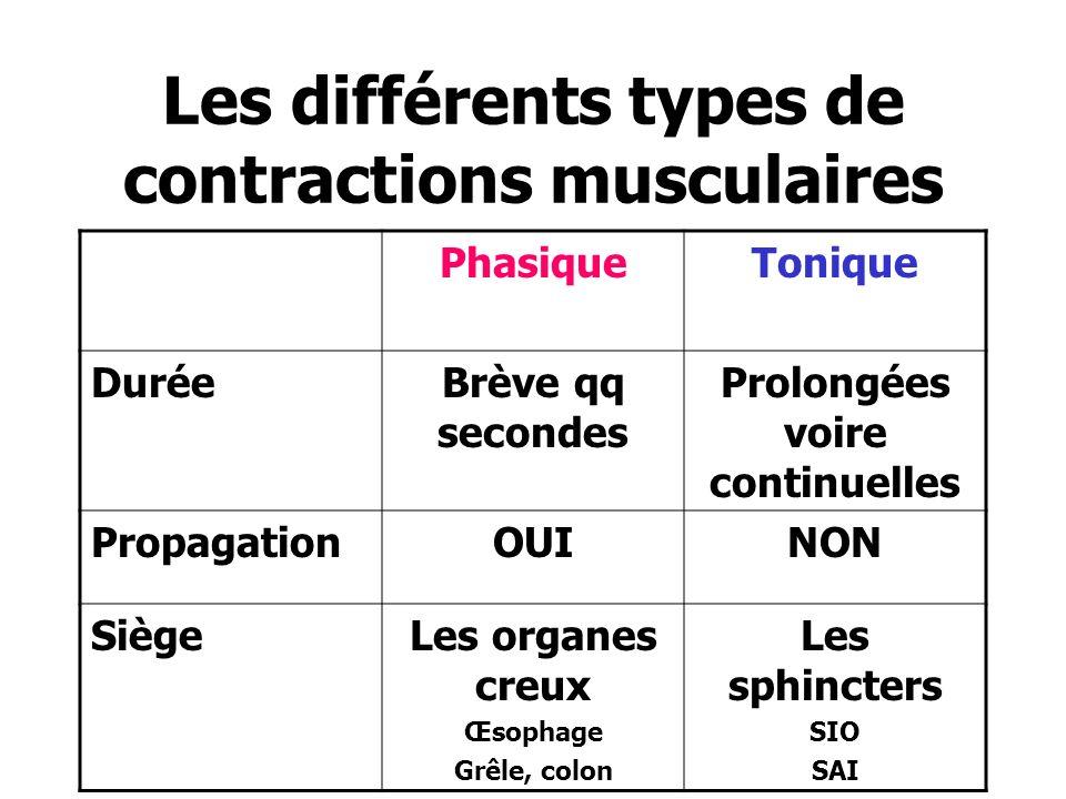 Les différents types de contractions musculaires PhasiqueTonique DuréeBrève qq secondes Prolongées voire continuelles PropagationOUINON SiègeLes organ