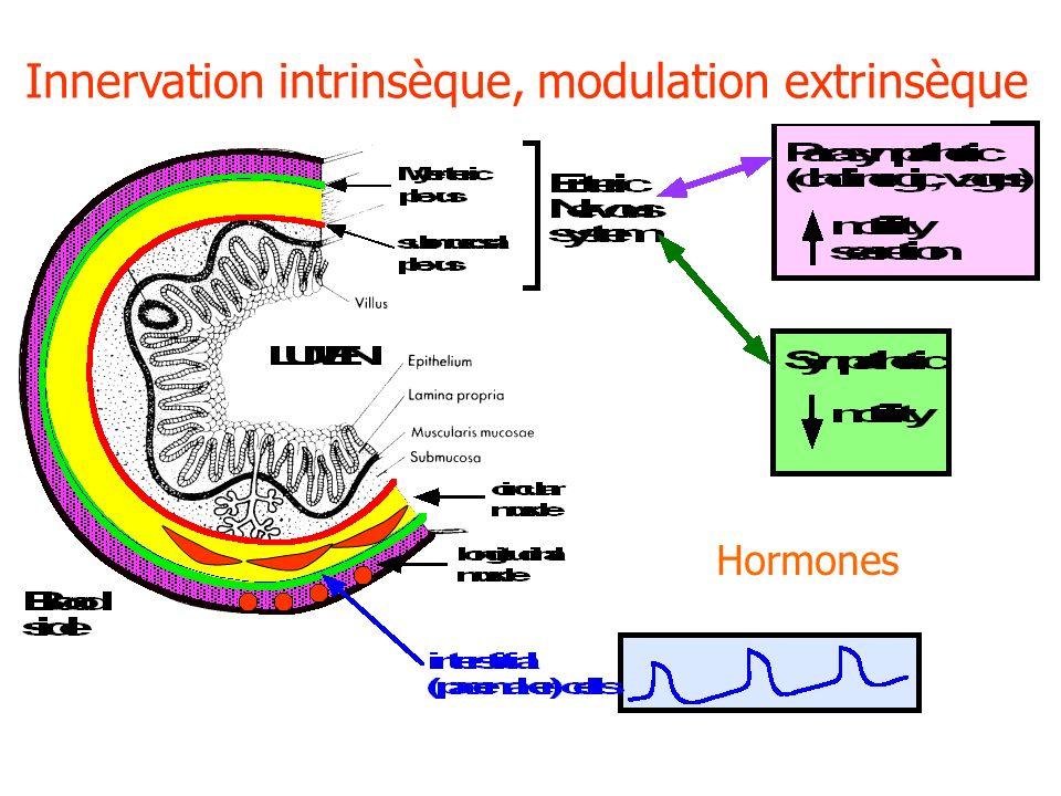 Études de motricité = manométrie –Mesure des contractions grâce à un capteur (cathéter) introduit dans la lumière digestive et relié à un enregistreur externe.