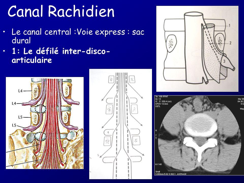 Techniques dexploration du rachis cervical Radiographie simple ++: troubles statiques, traumatologie, arthrose Scanner : os cortical et spongieux trau
