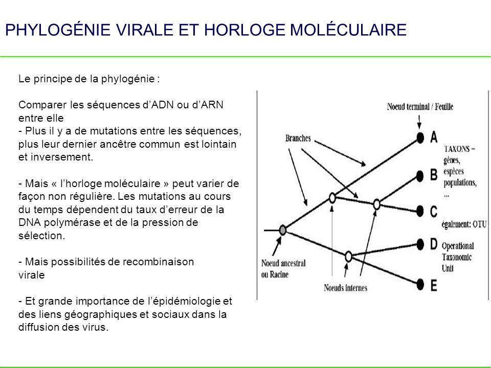 PHYLOGÉNIE VIRALE ET HORLOGE MOLÉCULAIRE Le principe de la phylogénie : Comparer les séquences dADN ou dARN entre elle - Plus il y a de mutations entr