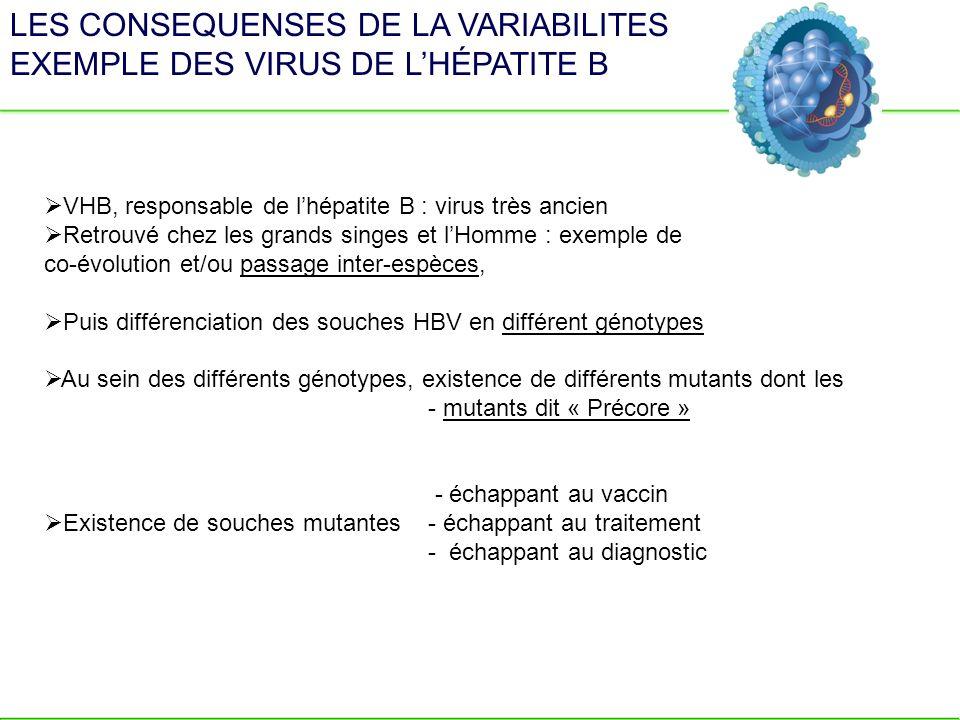 LES CONSEQUENSES DE LA VARIABILITES EXEMPLE DES VIRUS DE LHÉPATITE B VHB, responsable de lhépatite B : virus très ancien Retrouvé chez les grands sing
