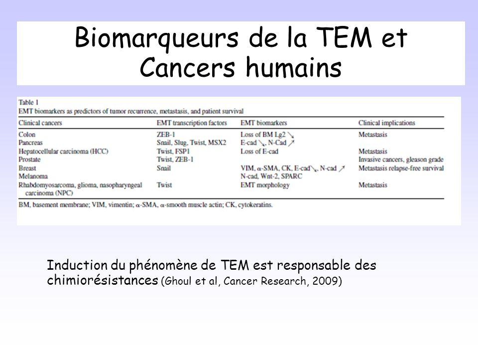 Biomarqueurs de la TEM et Cancers humains Induction du phénomène de TEM est responsable des chimiorésistances (Ghoul et al, Cancer Research, 2009)