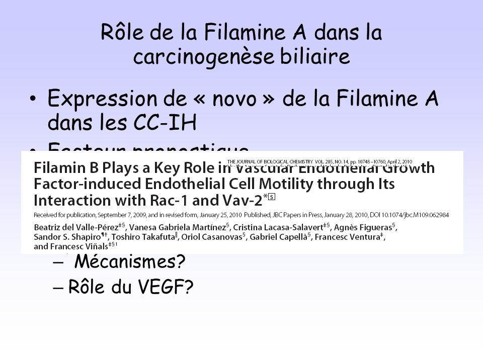Rôle de la Filamine A dans la carcinogenèse biliaire Expression de « novo » de la Filamine A dans les CC-IH Facteur pronostique Filamine A participe à lagressivité et à la progression tumorale des CC-IH Perspectives de recherche: – Mécanismes.