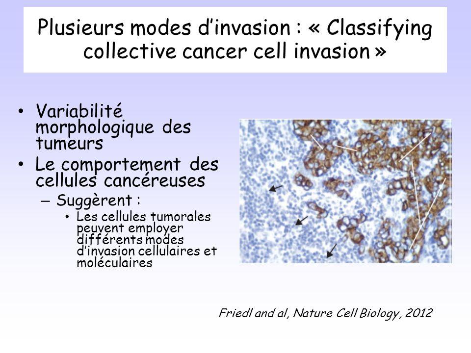 Plusieurs modes dinvasion : « Classifying collective cancer cell invasion » Variabilité morphologique des tumeurs Le comportement des cellules cancéreuses – Suggèrent : Les cellules tumorales peuvent employer différents modes dinvasion cellulaires et moléculaires Friedl and al, Nature Cell Biology, 2012