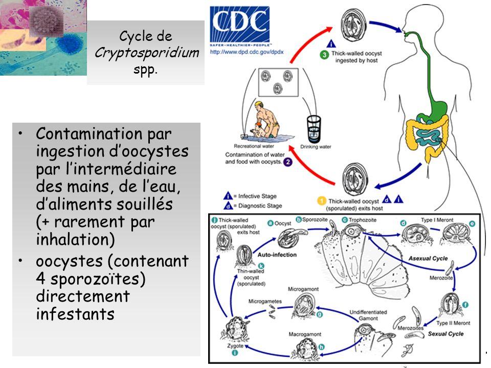Epidémiologie et clinique de la cryptosporidiose Epidémiologie : Contamination de lenvironnement par des oocystes Rôle des animaux délevage +++ Épidémies dues à la contamination des ressources deau Clinique : Sujet immunocompétent : Diarrhée spontanément résolutive en 2 à 3 semaines Durée et gravité des symptômes plus marquées chez lenfant et personne âgée Rares localisations extra digestives Sujet immunodéprimé (VIH+, greffé rénal…) : Diarrhée chronique, malabsorption, cachexie Localisations biliaires Prévalence : 0,3% dans la population française.