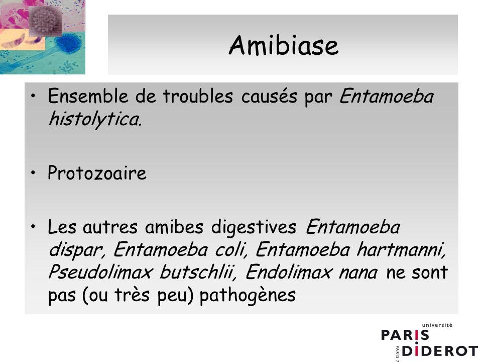 Amibiase Ensemble de troubles causés par Entamoeba histolytica. Protozoaire Les autres amibes digestives Entamoeba dispar, Entamoeba coli, Entamoeba h