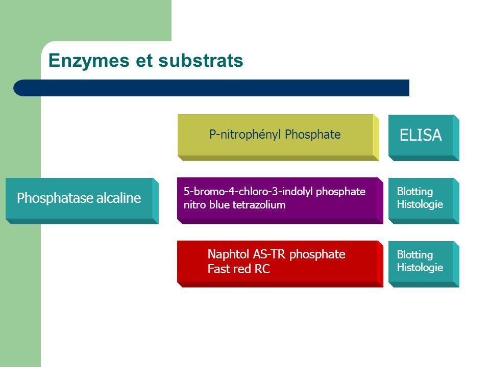 Enzymes et substrats Phosphatase alcaline P-nitrophényl Phosphate ELISA 5-bromo-4-chloro-3-indolyl phosphate nitro blue tetrazolium Naphtol AS-TR phos
