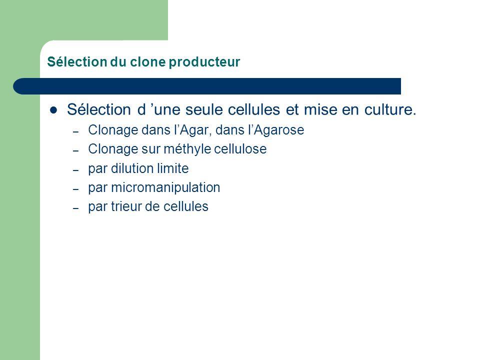 Sélection du clone producteur Sélection d une seule cellules et mise en culture. – Clonage dans lAgar, dans lAgarose – Clonage sur méthyle cellulose –